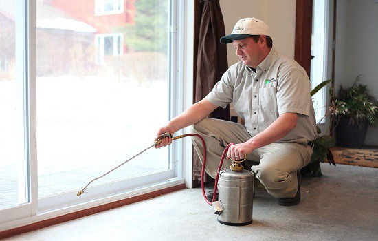 Why Hire A Pest Controls Service Provider In Eradicating Pest? – Pest Management Services