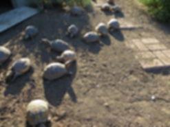 Protect Turtles and Tortoises