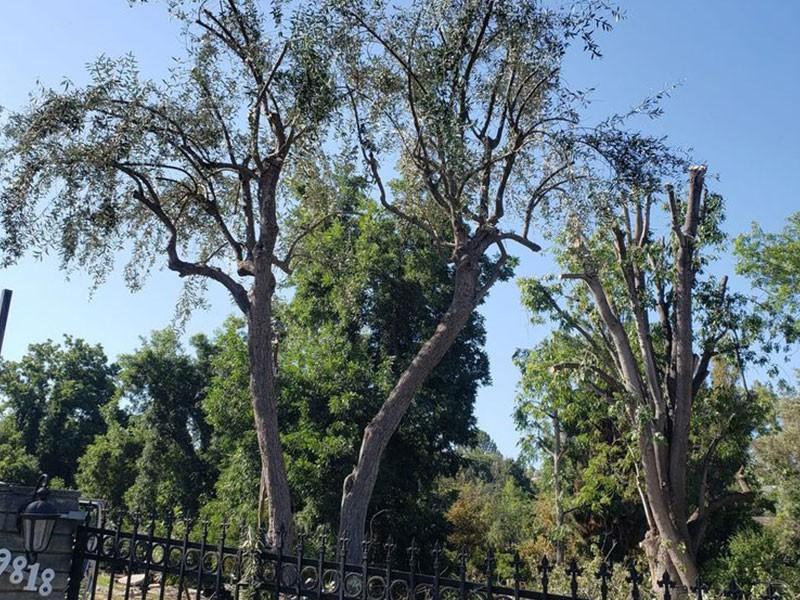Antonio Tree Services, Tree service near me Diamond Bar CA