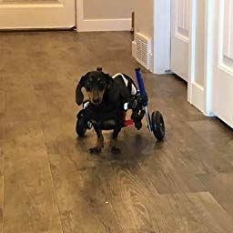 Dog Wheelchairs – A Blessing in Disguise