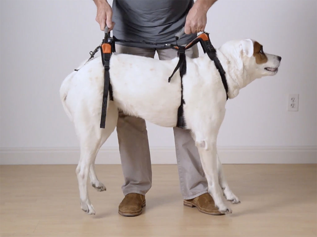 Which Harness For Your Dog?