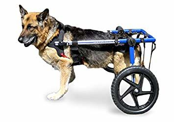 Dog Wheelchairs – Restoring Your Dog's Mobility
