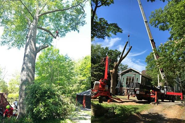 Silver Tree Service, Professional Tree Removal Services Alpharetta GA