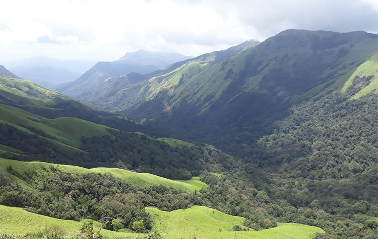Homestays in Chikmagalur and Sakleshpur – Flora Nature Stay