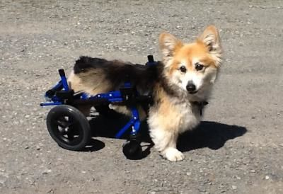 Benefits Of Using A Dog Wheelchair