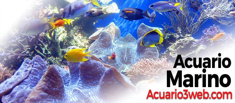 ACUARIO MARINO ჱ Guía para principiantes 2019 |▷ Acuario3web.com