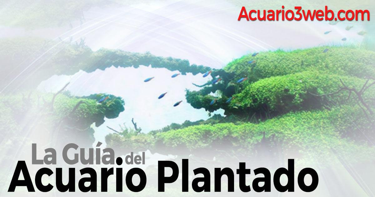 Acuario Plantado ჱ Guía para principiantes 2019