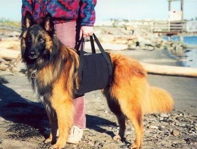 Huge Selection of Large Dog Harnesses