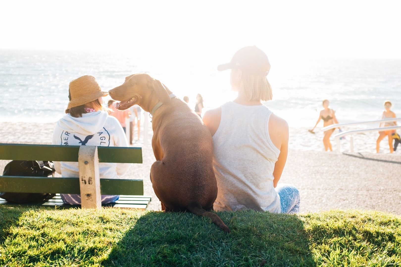 6 Tips For Picking Up Women At The Dog Park
