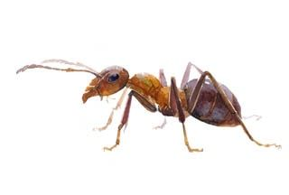 Get Pest Control Services for Cockroaches Control in Melbourne