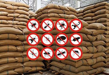 Advantages Of Grain Fumigation