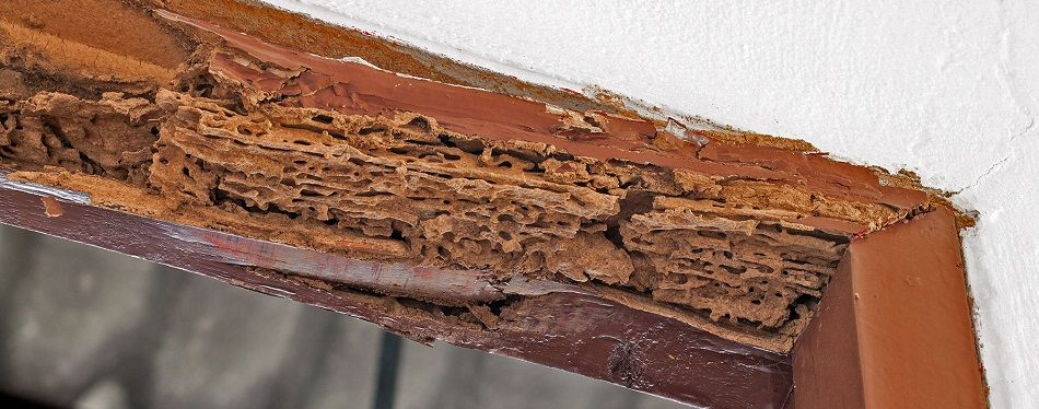 Safe Havens Enterprises | Termite & Pest Control Company Lahore