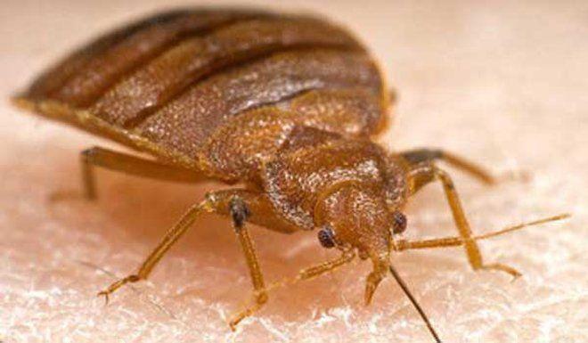 Termite Pest Control Melbourne - Get Your Termite Control Expert Now
