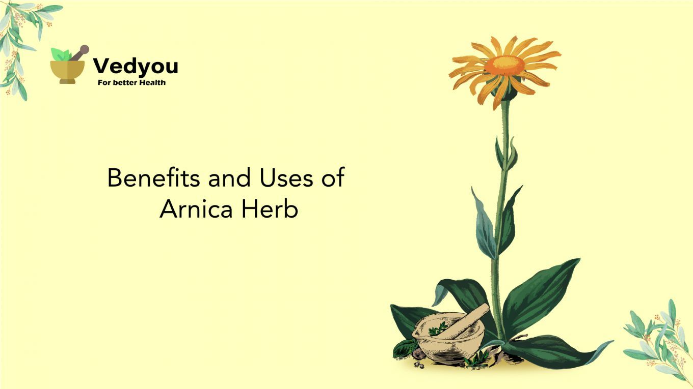 Uses of Arnica Herb and Benefits | Arnica Herbal Plant | Vedyou