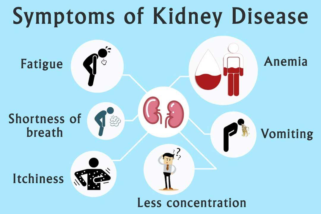 Best Ayurvedic Medicines for Kidney Disease Treatment