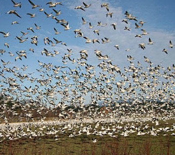 Looking for Industrial Bird Control Services Provider in India
