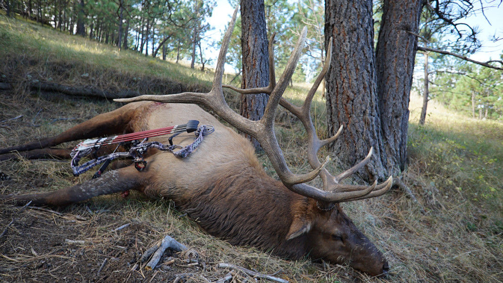 7 Mistakes of Archery Bow Hunting