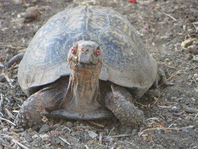 World Turtle Day, Shellebrate, Happy World Turtle Day, World Turtle Day Celebrations