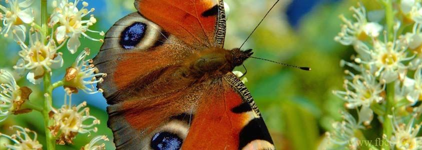 Butterfly new facebook Cover Photos Pictures collection