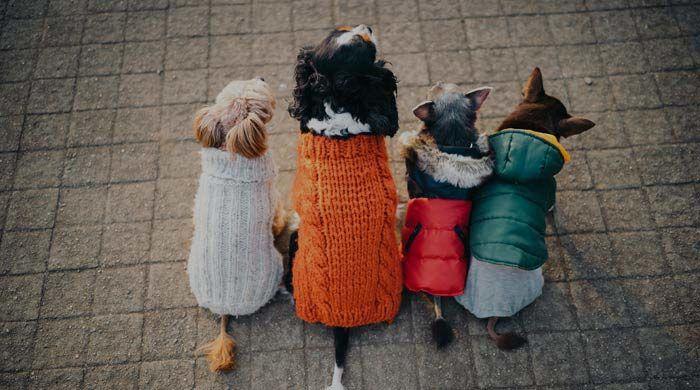 Pet Accessories Australia | Purfect Pet Accessories