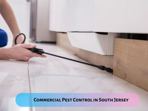 The Benefits of Hiring Commercial Pest Control Service Providers in South Jersey – Pest Management Services