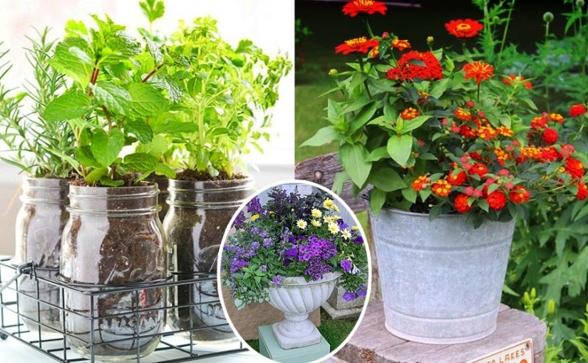 Container Gardening - Biocarve Seeds