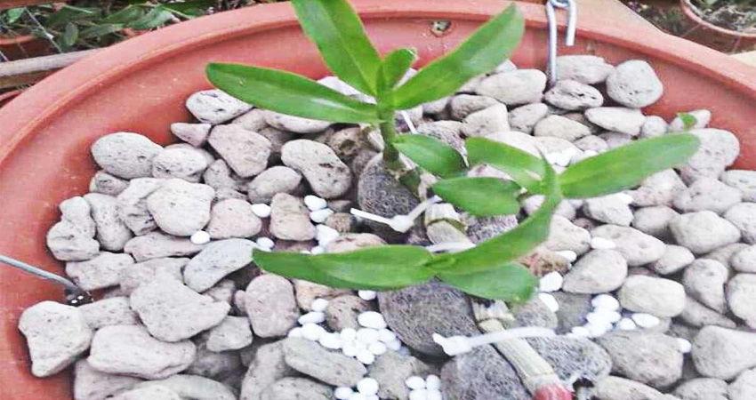 Bán đá bọt trồng Lan trồng cây giá tốt trên toàn quốc | Vietnam Like