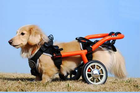 You Need A Adjustable Dog Wheelchair