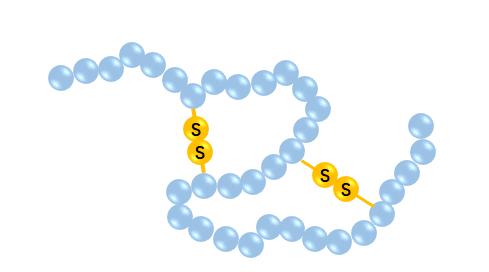 Cyclic Peptides - Creative Peptides