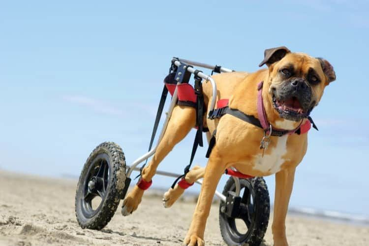Dogs wheelchair