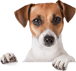 Know About the Best Pet Care During Winters