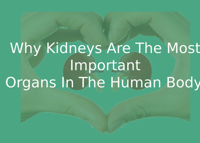 Why kidneys are the most important organs in the human body?