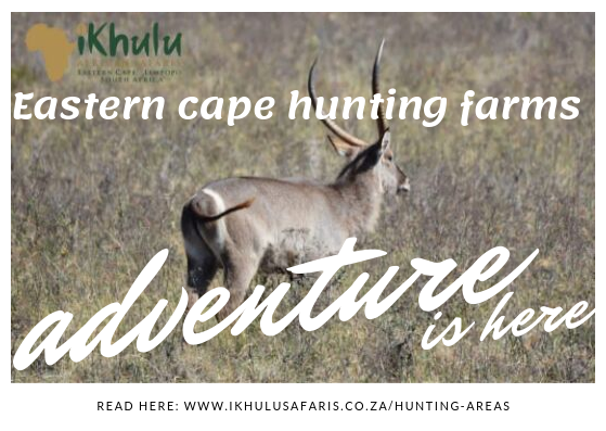 Eastern cape hunting farms