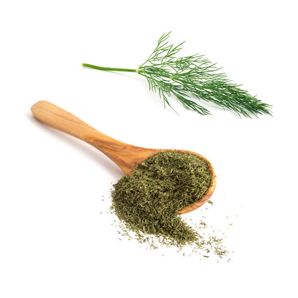 Dill10.com – Dill: Properties, benefits and contraindications