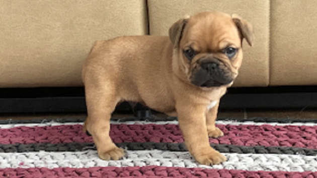 Family Puppies– From our Home to yours - YourInfo.Wiki