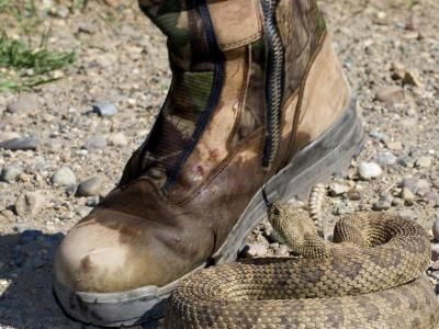 Wear A Snake Boots For Hunting Trip » Dailygram ... The Business Network