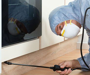 Pest control in Sharjah | Outbreak Pest Control Services LLC