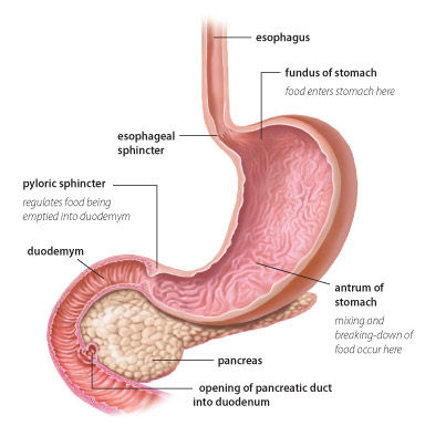 Herbs For Gastroparesis Natural Treatment, Symptoms And Diet | Herbal Care Products