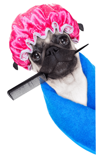 Dog Grooming Services | Pet Grooming Services | Dog Groomers - Petsfolio