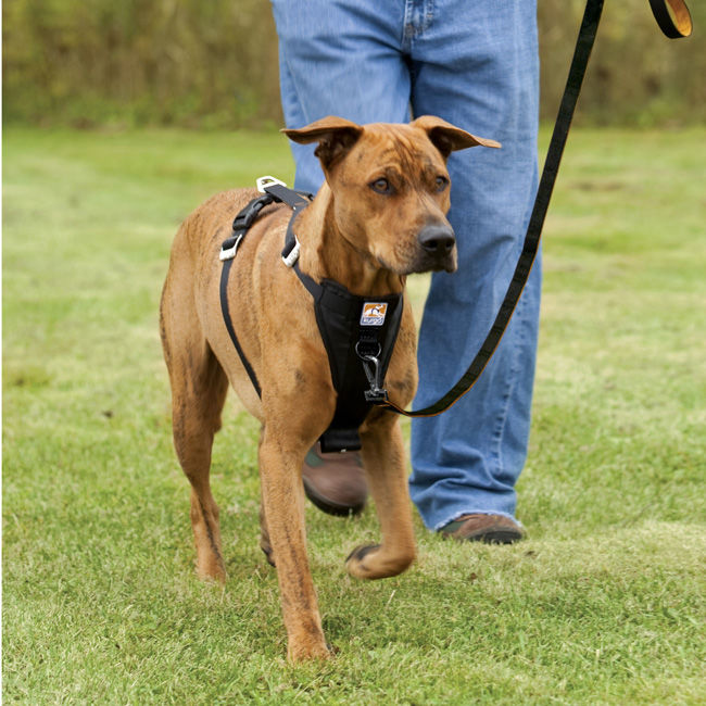 Measure Your Dog For A Harness