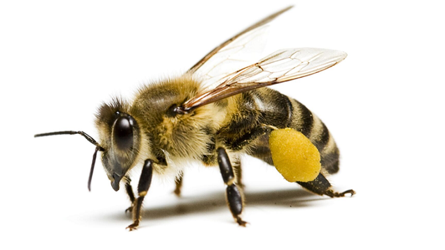 Bee Removal and Bee Control Services in Melbourne - 047-303-8000