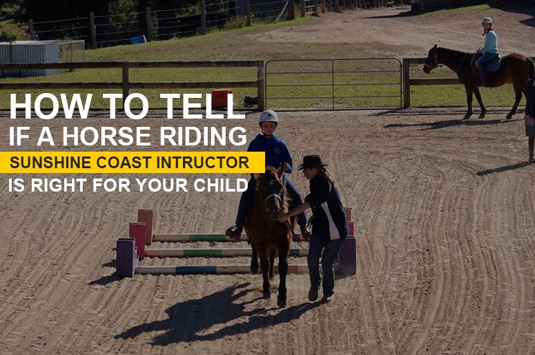 Horse Riding Sunshine Coast