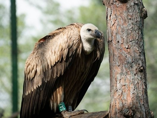 How Turkish Cargo transported Dobrila the endangered griffon vulture | Air Cargo
