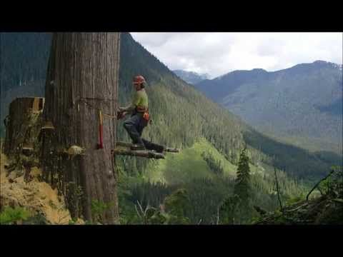 Felling Trees And Forests