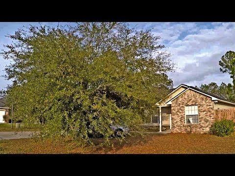 Felling Trees In Greenbelt