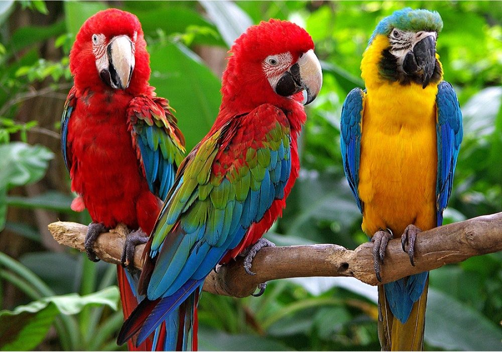 HOME - samantha parrotstore