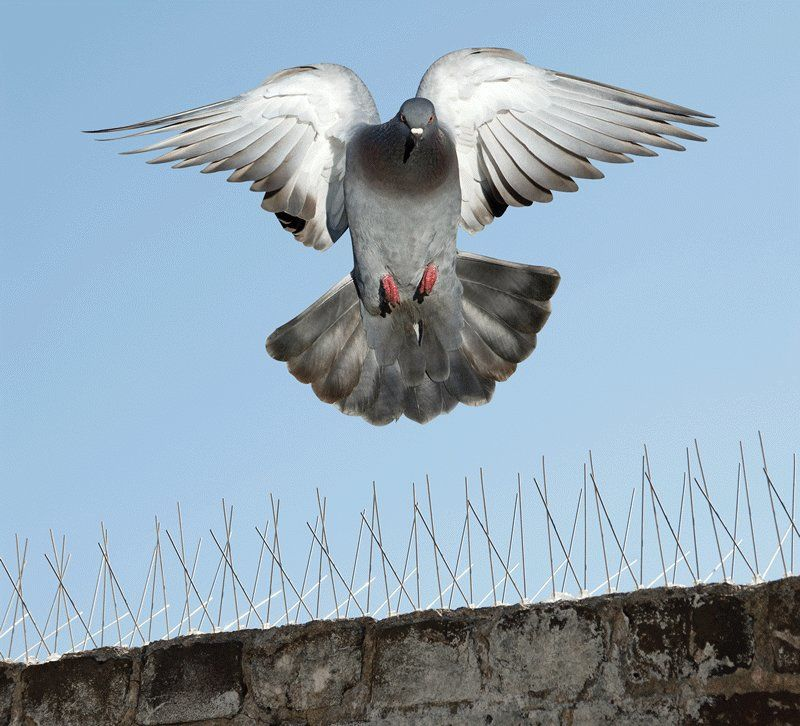How To Control Birds On Commercial Zone
