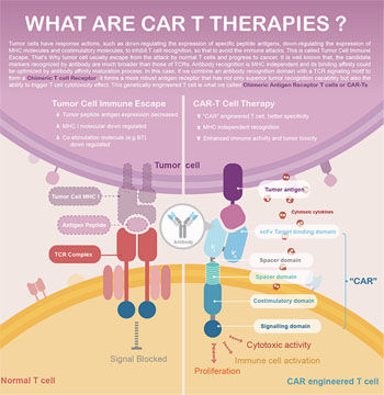 Immunotherapy & Cell Therapy - Creative Peptides
