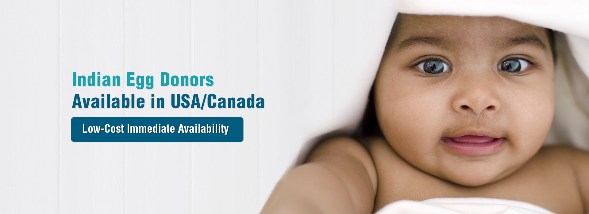 How to find an egg donor online in USA?