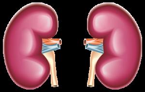 Ayurvedic Chronic Kidney Disease Treatment to Prevent Kidney Damage